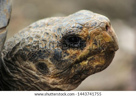 The giant tortoise of the Galapagos is the largest turtle species that exists on Earth. It can reach 300 kg in the wild (more even in captivity) and is believed to live about 100 years.