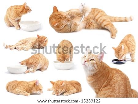 the ginger cat - attitudes