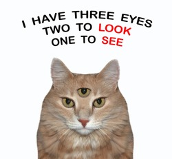 The ginger cat has got third eye. I have three eyes two look one see. White background. Isolated.