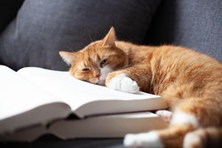 the ginger red cat is curled up in a ball and sleeps on two large, thick books. Education concept