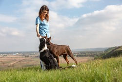 The girl feeds two dogs a treat. Doberman Dobermann and border collie dogs stands and sits on a hill against the backdrop of nature. Horizontal orientation.