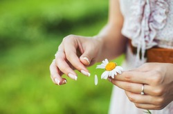 The girl guesses on a chamomile on nature in summer. The girl tears off the petals of daisy.