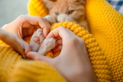 The girl hand make heart shape on lovely cat. Orange cat baby relax on the yellow knitted blanket. Red kitten and cozy nap time.  The paws of pet raised up