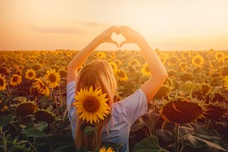 the girl in the field with sunflowers folded her hands like a heart. man in nature in the sunset light.