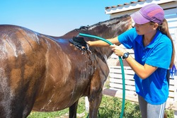 The girl thoroughly washes the horse with a special brush and pours water from a hose