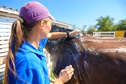 The girl thoroughly washes the horse with a special brush and soap