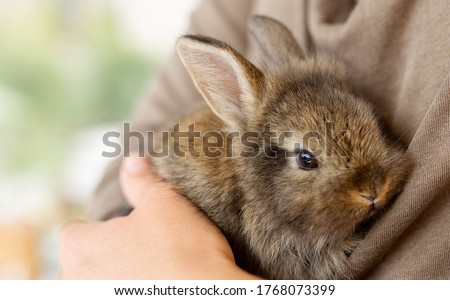 the girl with the rabbit. holding cute fluffy Bunny.Friendship with Easter Bunny. Spring photo.Close up