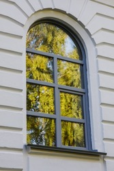 The glass of the window reflects the leaves of the tree. Part of the 19th century building, painted with light paint. Urban background with a beautiful shape in architecture. Vertical photo.