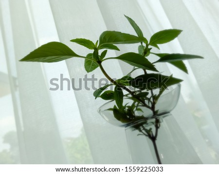 The glass vase consists of green plants and the back is white curtains. #1559225033