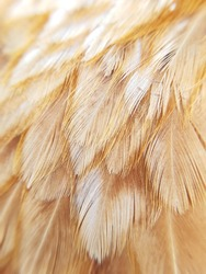 The gold bird's feather closeup. Pattern background.