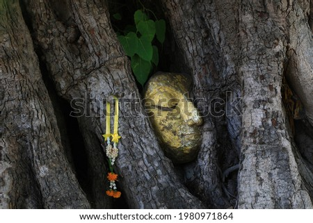 The golden Buddha head entwined in tree roots at Wat Prode Sut, Bang Pa-in , Ayutthaya , Thailand Foto stock ©