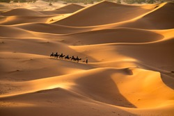 The golden dunes of Erg Chebbi, Morocco