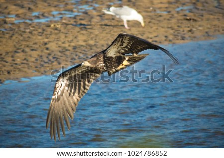 The golden eagle is one of the best-known birds of prey in the Northern Hemisphere. It is the most widely distributed species of eagle.