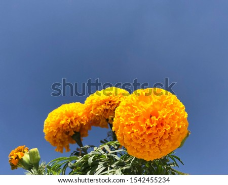 The Golden Flora of the Earth #1542455234