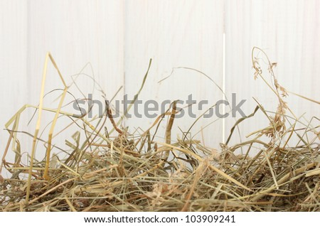 The golden hay against the white barn close-up