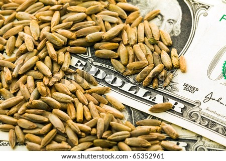 The grains of wheat lying on the American money