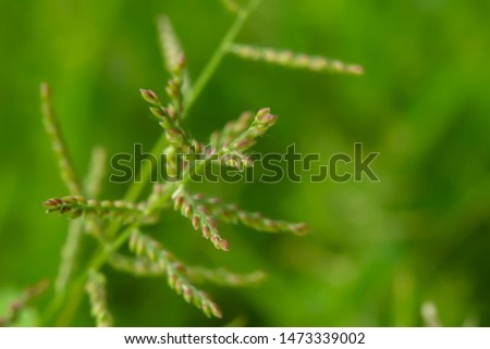 The grass blooms and blooms to lure insects into the food, which can be mixed with other pollen. #1473339002