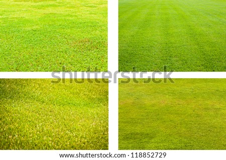 The grass in four different perspectives background texture