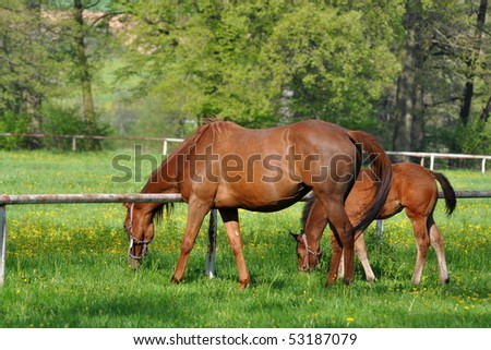 the grass is always greener. - stock photo