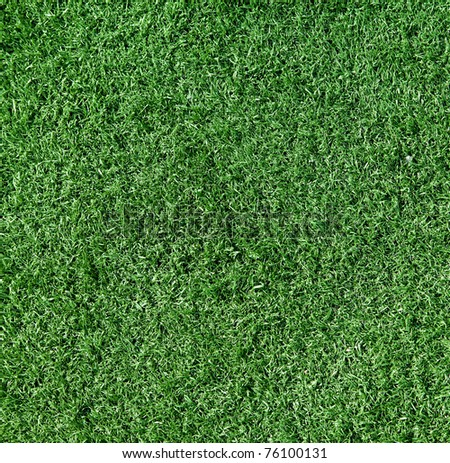 The grass is green, small, close-up. Background