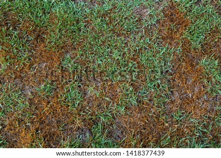 The grass that gets wet will be wet and not wet as a natural pattern. #1418377439
