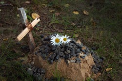 the grave of the family's beloved pet, a sand mound and a hand-made wooden cross, a couple of daisies