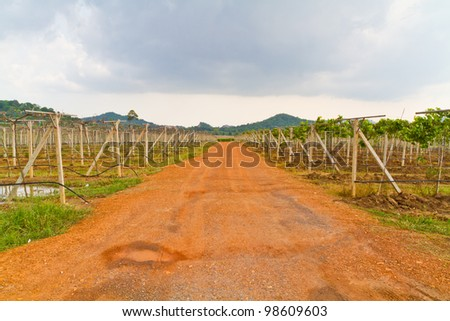 The gravel roads in the vineyards