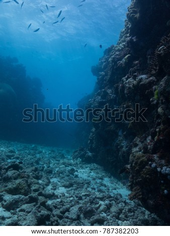 the great barrier reef #787382203
