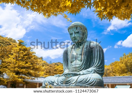 The Great Buddha of Kamakura at autumn season with yellow leaf, Kanagawa,Japan. Originally housed in a hall that was destroyed twice in the 14th Century, the great Buddha at Kotoku-in Temple dates fro