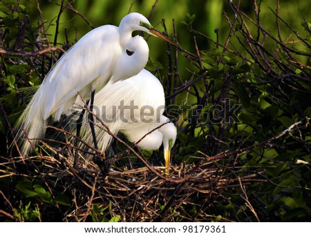 The Great Egret / White Bird / Florida.