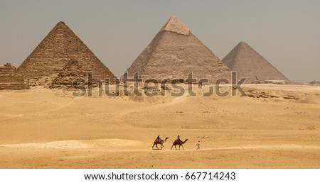The Great pyramid with camel in Giza, Egypt #667714243