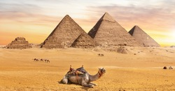 The Great Pyramids, one of the wonders of the World, and a camel near them, Giza, Egypt