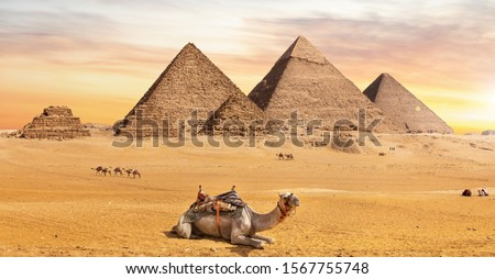 The Great Pyramids, one of the wonders of the World, and a camel near them, Giza, Egypt Stock photo ©