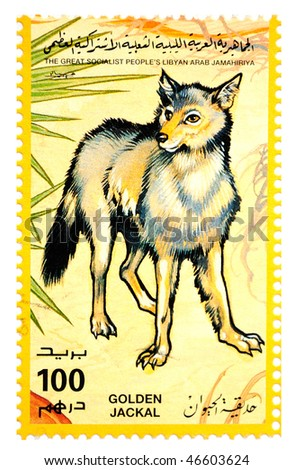 The Great Socialist Peoples Libyan Arab Jamahiriya - CIRCA 1991: A Stamp printed in The Great Socialist Peoples Libyan Arab Jamahiriya shows Golden Jackal, circa 1991