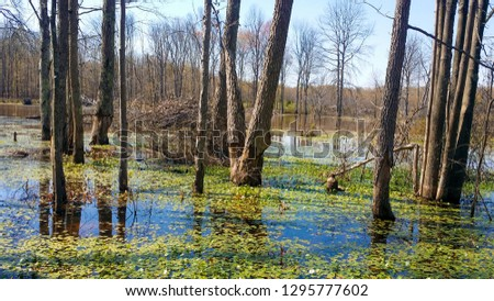 The Great Swamp of Northern Virginia, USA #1295777602