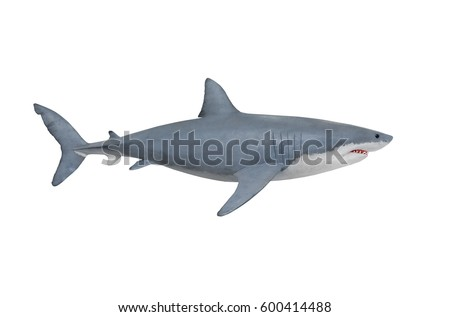 The Great White Shark - Carcharodon carcharias is a world's largest known extant predatory fish. Animals on white background.