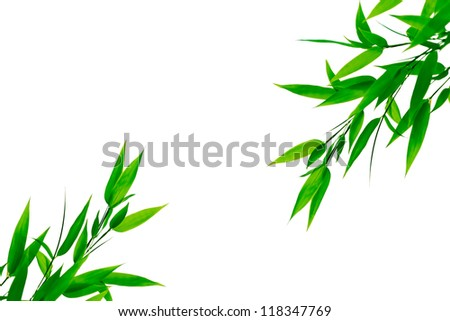 The green bamboo leaves on a white background