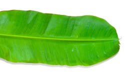 The green banana leaf isolated on a white background with a plane orientation.