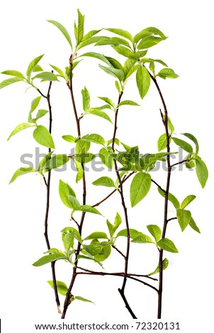 The green branch on a white background.