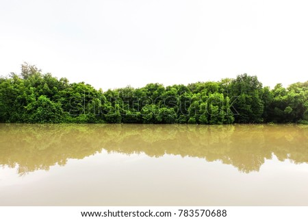 The green forest in the water, Mangroves tree background. - Shutterstock ID 783570688