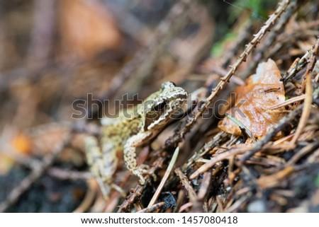 The green frog macro photography