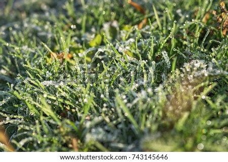 the green grass is covered with frost. #743145646