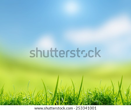 The green grass on the field with sky #253341001