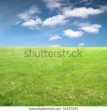 The green grass stretching to the horizon and blue sky with little clouds. Nature background for any purpose