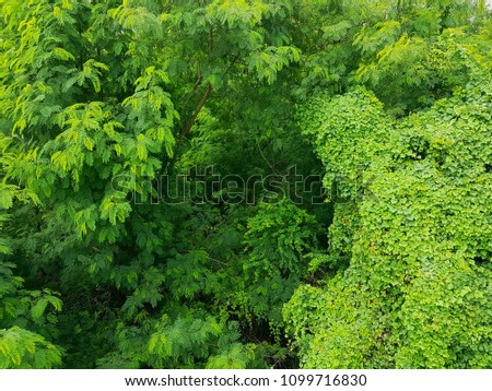 The green leaves are covered up full of space. top view  #1099716830