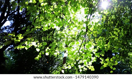 The green leaves blocked the sunshine, and the sunshine fell through the cracks #1479140390