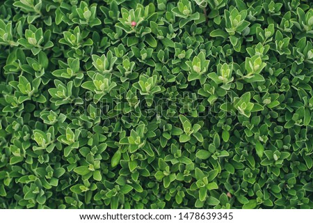 The green leaves that are sharp and sharp