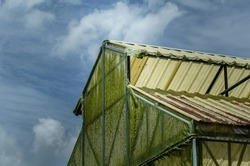 The green moss and grime on greenhouse insect screen mesh with the cloud and sky background.