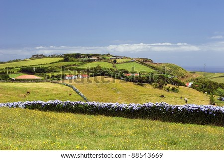 The green pasture on Azores with hydrangea fence