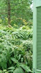 The green plants flourish in the garden in summer